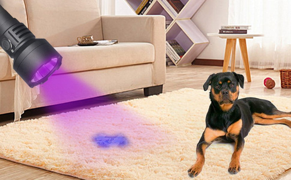 Find out your Dog's Little Secretes