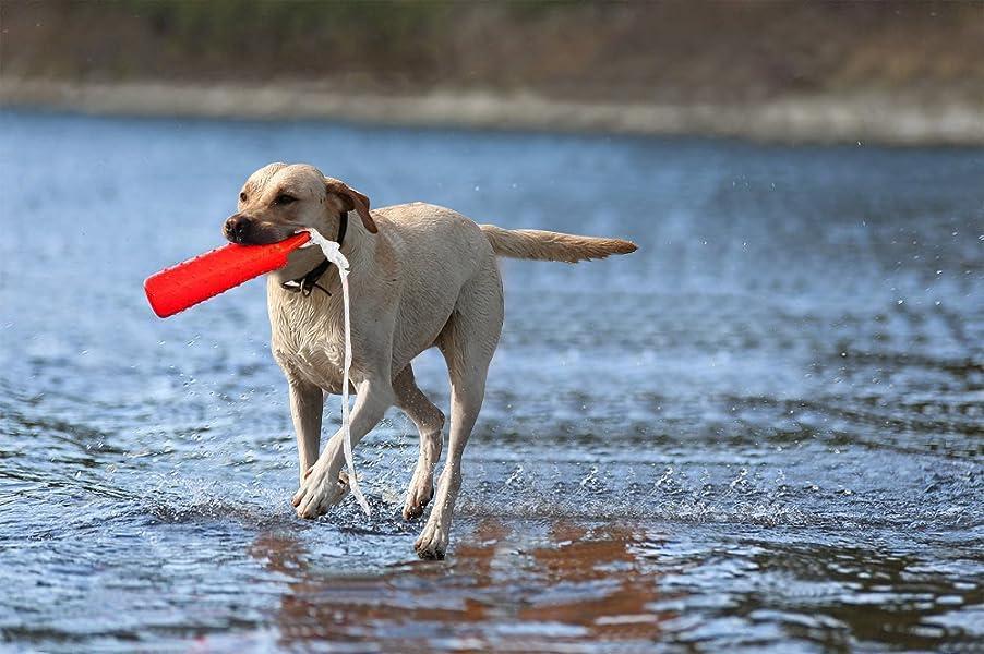 Dog Training Bumpers Amazon