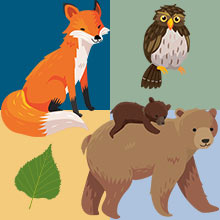 woodland illustrations and colors inspired by nature bear fox owl