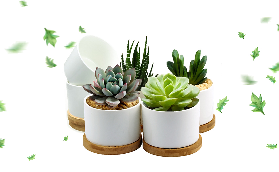 Succulent Pots, ZOUTOG White Mini 3.15 inch Ceramic Flower Planter on plants with white flowers, plants at ikea, plants at kroger, plants at tj maxx, plants under evergreen trees, plants at kmart, plants at harris teeter, plants at publix, plants at sam's club, plants that repel bugs and pests, plants at homegoods, plants that repel mosquitoes, plants inside home, plants at safeway, plants at disney, plants at michaels, plants at office depot, vines depot, plants at cvs, plants at menards,