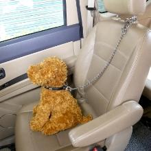 dog car harness belt