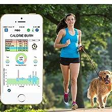 Bluefang, Bluetooth, dog, dogs, pet, pets, dog collar, dog door, fence, dog training