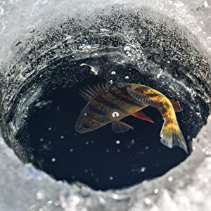 A fish in the ice water