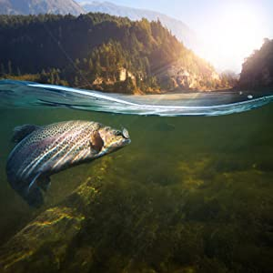 A fish in the freshwater