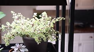 Amazon Com Indoor Grow Light 3 Tier Stand Sunlite Light