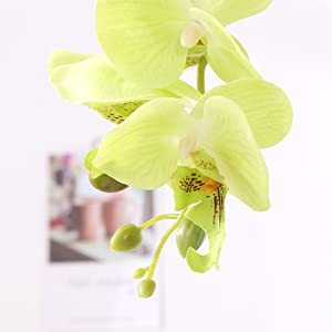 Petals of green artificial orchid flowers