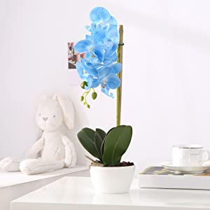blue fake orchid on the table