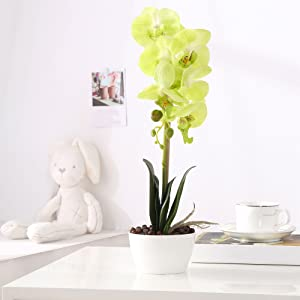 green fake orchid flower on the table