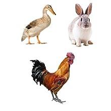 Chicken_Coop_Rabbit_Hutch_Pet_Playpen_10