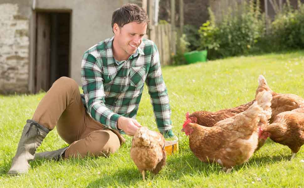 Chicken_Coop_Rabbit_Hutch_Pet_Playpen_13