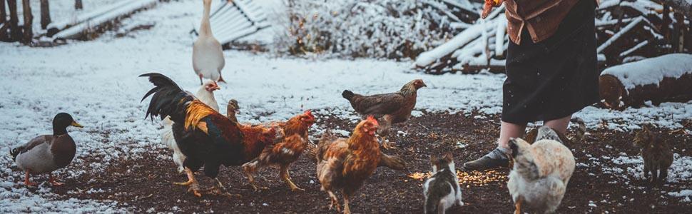 Chicken_Coop_Rabbit_Hutch_Pet_Playpen_08