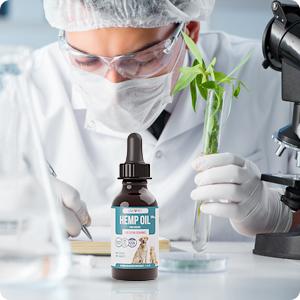 hemp oil science studies