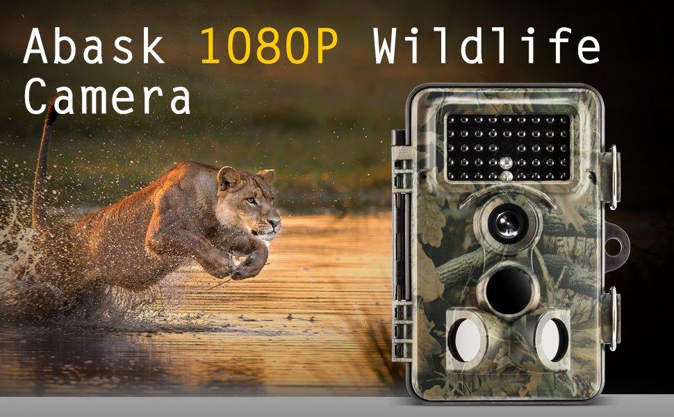 Amazon.com : Wildlife Camera, Abask Trail Surveillance Waterproof ...