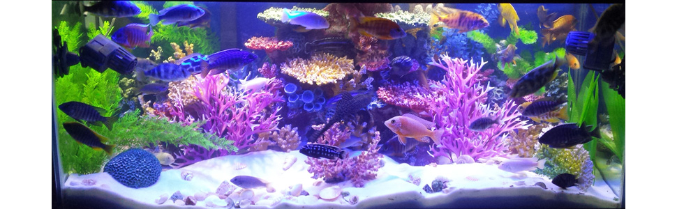 Instant Reef Aquarium Decor, Fish Tank Decorations, Artificial Coral Reef Inserts for freshwater