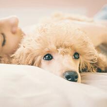 Amazon.com : PLS Pet Paradise Orthopedic Pet Bed