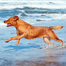 afe and non-toxic, specifically designed for dogs