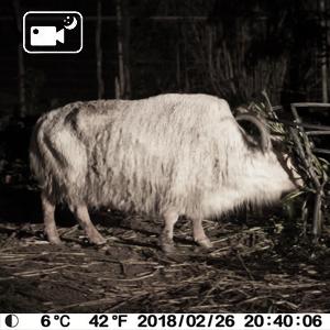 night vision no glow