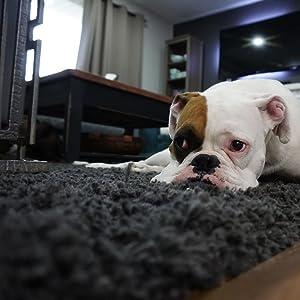 sad dog carpet