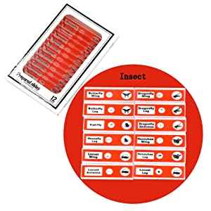 Microscope Slides- Insect