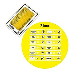 Microscope Slides - Flowers