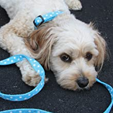 Puppy Collars and leashes, Small Dog collars and leashes