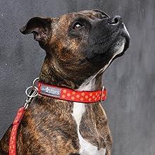 Cute Dog Collar for medium dogs