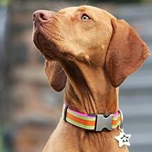 Colourful Dog Collars, Designer Dog Collars