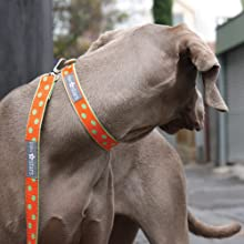 Cute Dog Leashes