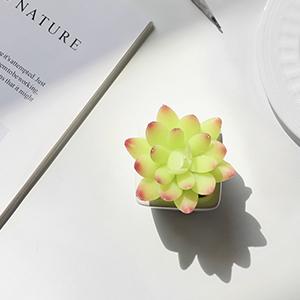 mini succulents plants potted