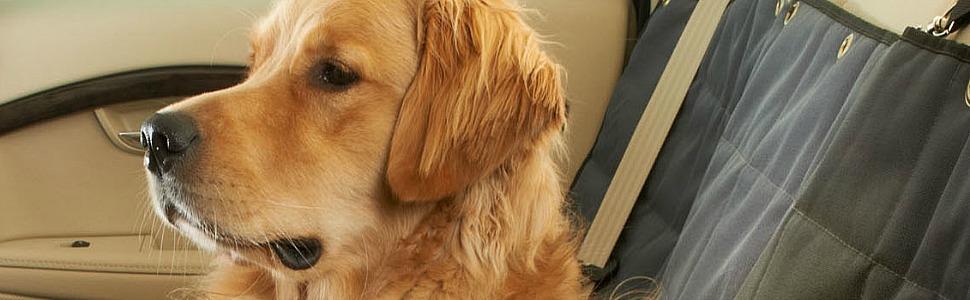 dog sitting on car seat