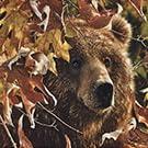 bear moose decor decorations log cabin outdoors animals nature animal leaves fall