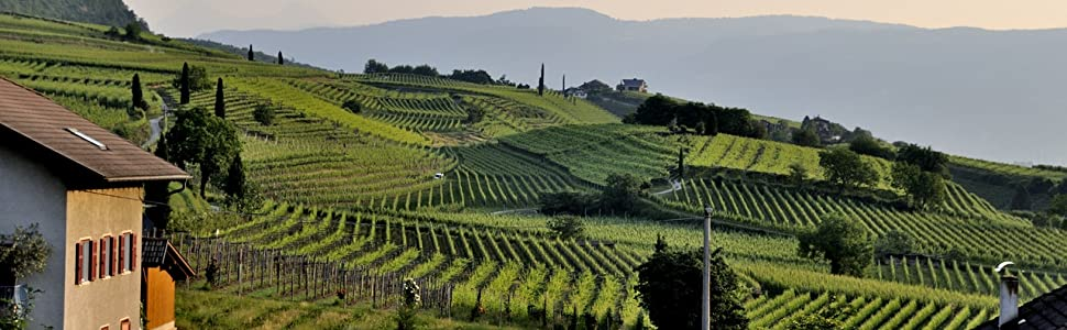 Thirteen Chefs Wine Collection Transforms You To a Tuscan Countryside Vineyard