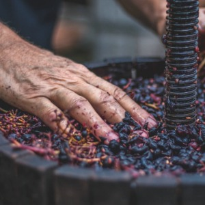 traditional organic balsamic vinegar