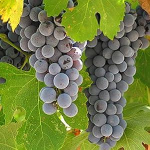 giusti balsamic vinegar of modena