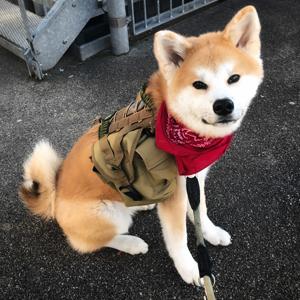 walking dog vest harness