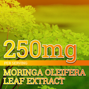 Moringa Oleifera leaf extract supplement turmeric 250mg vegetarian capsules