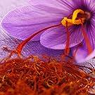 Saffron herb anxiety depression