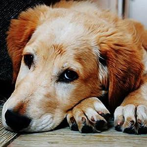 old dog pet lover dog chews pet treats soft chews petjoy