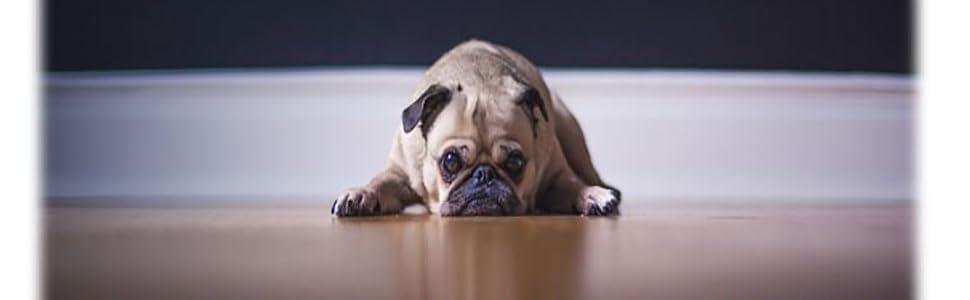 dog lover pets pet supplies joint pain supplements petjoy petco