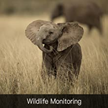 wildlife monitoring