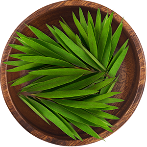 Amazon.com : Maple Holistics Sage Shampoo for Anti