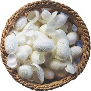 الببتيد الحرير