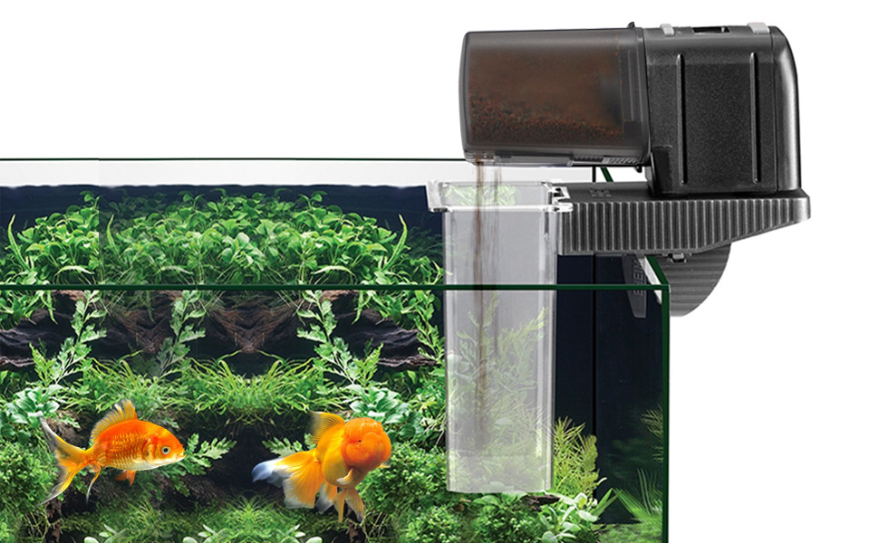 kam pic ornamental quotations feeder eheim feeding automatic guides lithium china goldfish tank get device item fish shopping