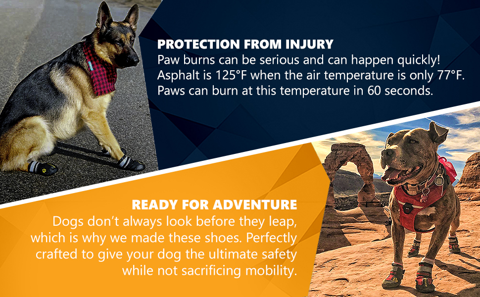 Hot Pavement Road to Protect Paws from Burns and Cuts and Scrapes from Rocks Cactus Injury