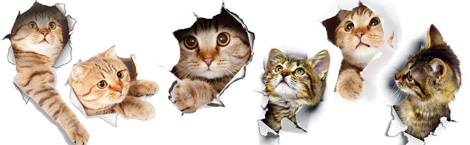 3D Sticker Decoration Cute Kitty Kitten Pussycat Wallpaper Home Design Decal New