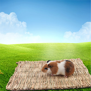 For Guinea Pig