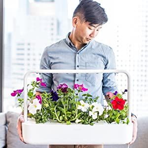 indoor window herb tomato strawberry herbs basil weed plant pods garden light growing gardening kit