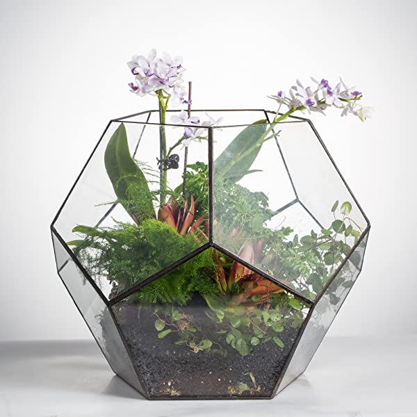 Large Pentagon Ball Shape Open Glass Geometric Terrarium with Fern and  Orchid - Amazon.com: Large Pentagon Ball Shape Open Glass Geometric