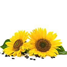 sunflower oil mud mask hydrating skin face mask all skin types for women and men facial acne treat