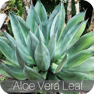 Organic Aloe Vera Leaf speedyvite happy colon cleanse cleaner
